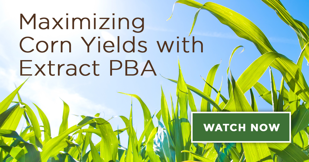 Corn Yields Webinar