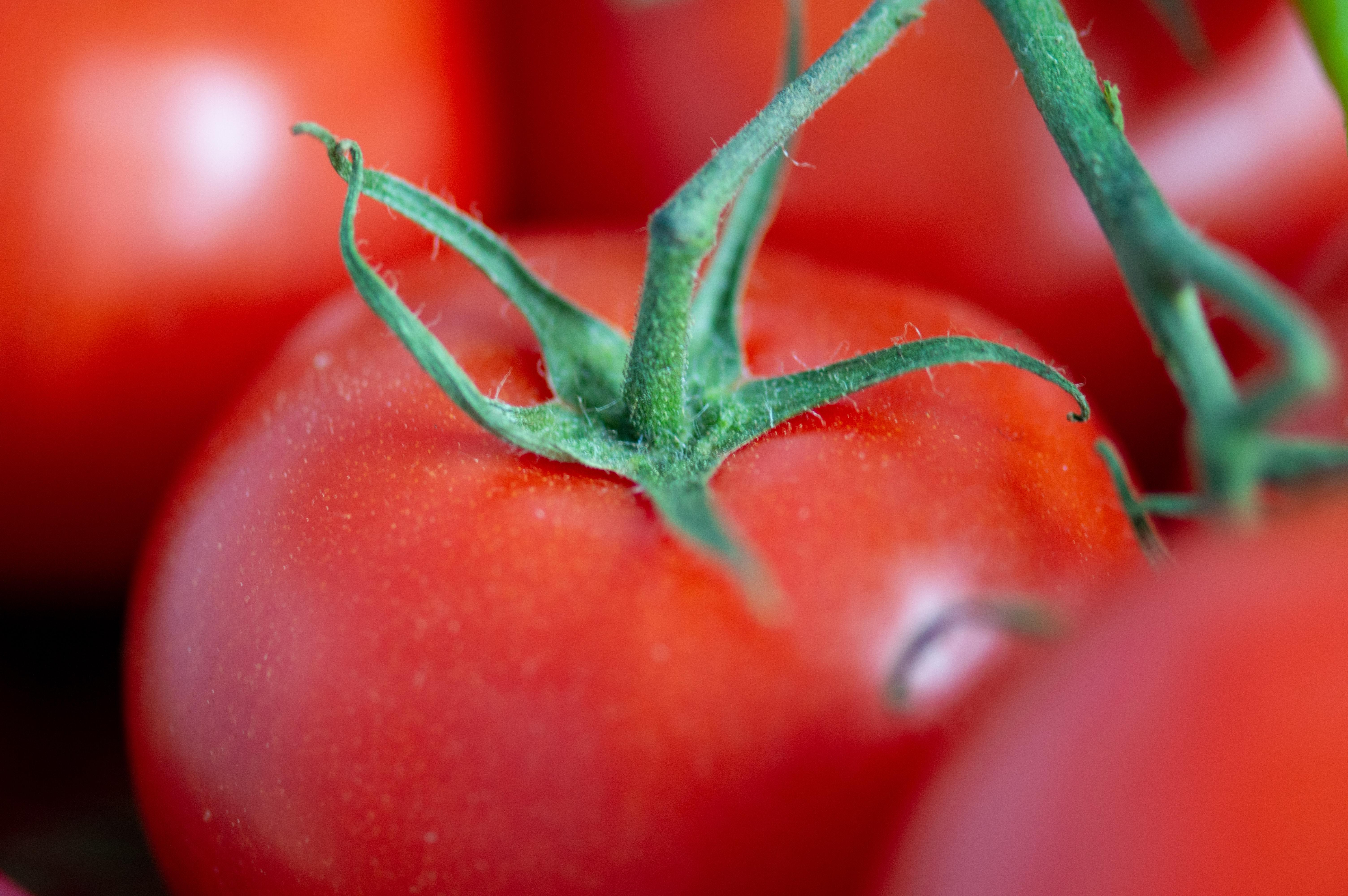Feature studies fruit veg
