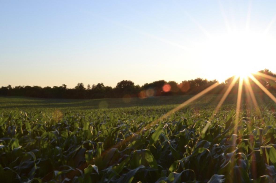 Idaho Corn Growing Champions