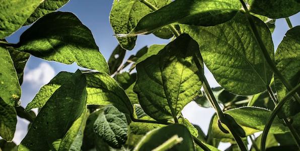 Soybeans Hub Image-1