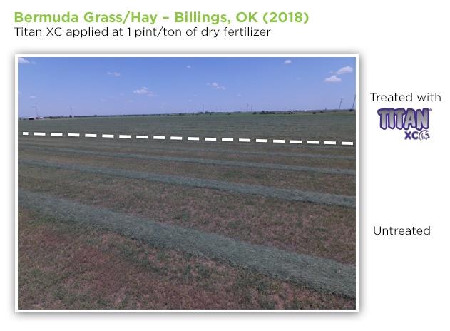 bermuda-grass-hay-OK-1
