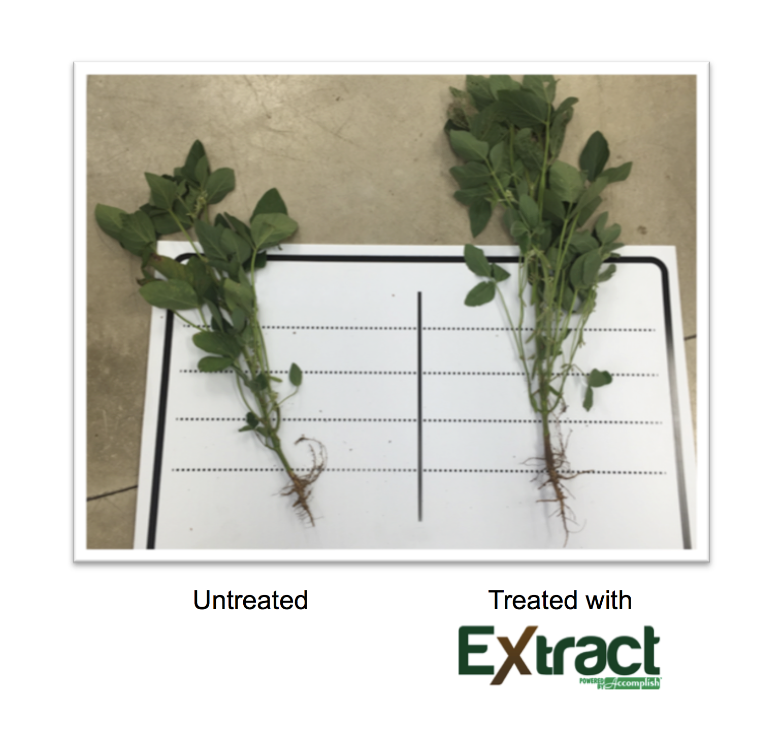 fall_extract_1_soybean