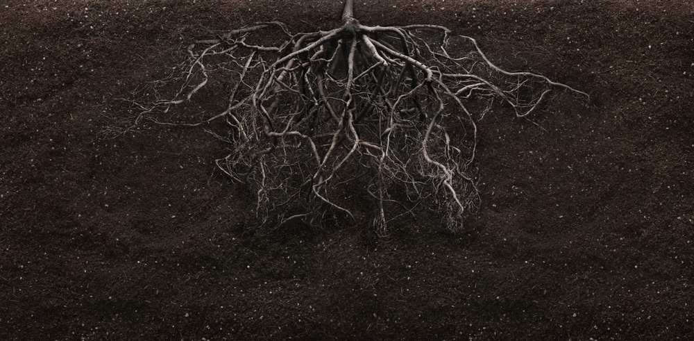 root-brain