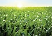 agricen_six_million_ag_acres